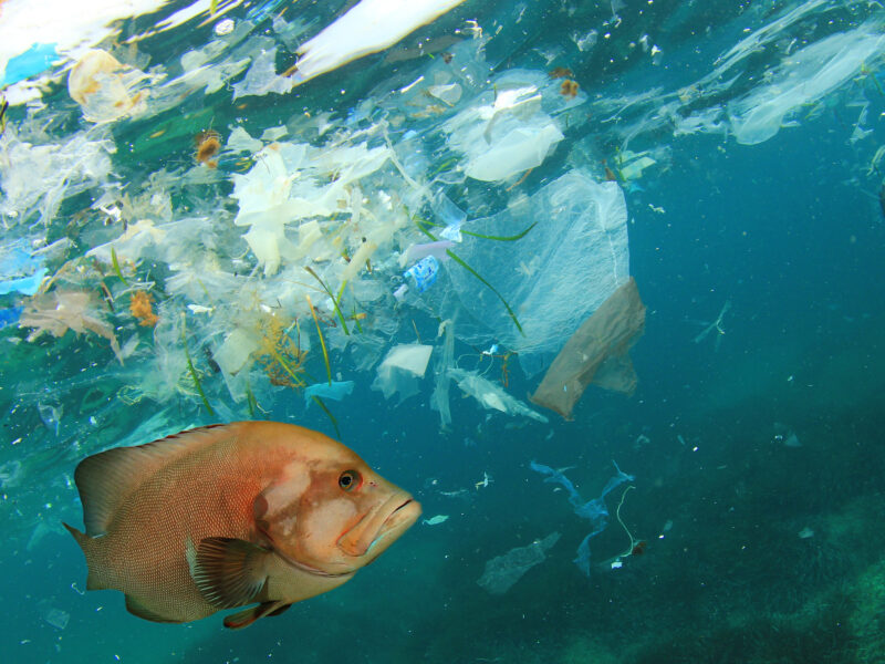Nordic project on plastic additives in the sea